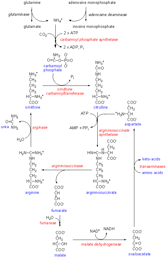 sythesis of urea Synthesis of urea from ammonia and carbon dioxide norman w krase, and  v l gaddy ind eng chem , 1922, 14 (7), pp 611–615 doi: 101021/.